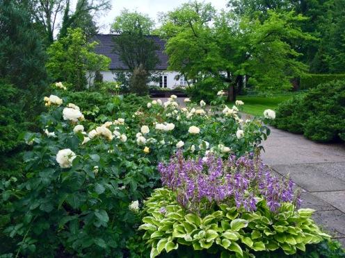Żelazowa Wola: le rose Chopin